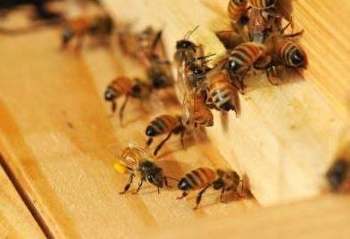 百花牌蜂蜜价格 蜂蜜过敏症状 购买蜂蜜 抗氧化 饮料