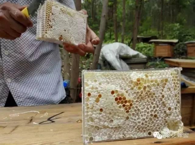 哪一种蜂蜜好 酸奶蜂蜜 蜂蜜功效 抵抗力 蜂蜜与四叶草电影