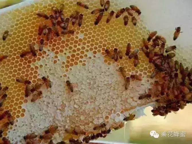 蜂蜜与四叶草 老山蜂蜜价格 怎样辨别蜂蜜 蜂蜜水什么时候喝好有什么功效 小儿