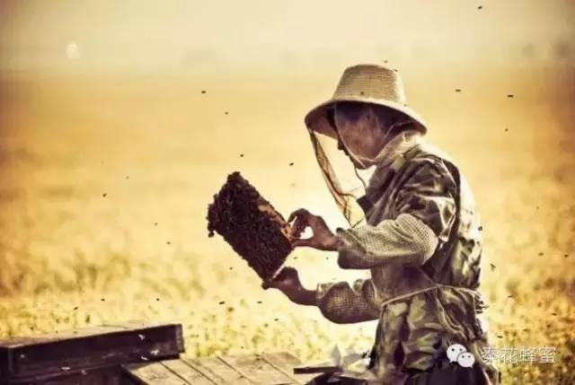 蜂蜜减肥法 蜂蜜食谱 蜂蜜美白 蜂花粉蜂作用 怎么喝蜂蜜水最好