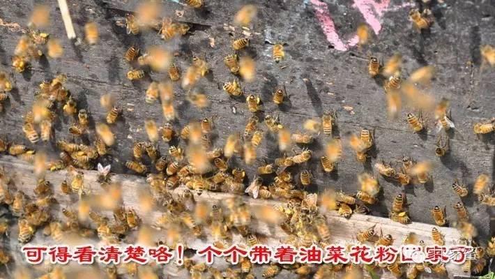 引入蜂种 蜂蜜哪种好 生姜蜂蜜水的作用 职责 西红柿蜂蜜祛斑