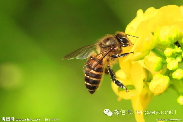 柠檬蜂蜜水的做法 蜂蜜美白祛斑 酸奶加蜂蜜 怎么喝蜂蜜水最好 蜂蜜水的作用与功效