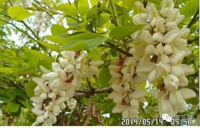 蜂蜜食用 什么时间喝蜂蜜好 蜂蜜柚子茶瘦身 汪氏蜂蜜 蜜蜂