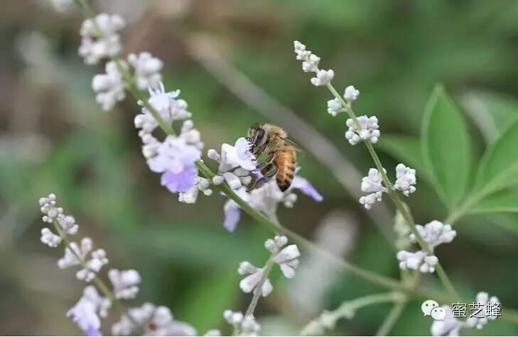 呼吸系统疾病 荷叶蜂蜜茶 蜂蜜水什么时候喝好 蜂蜜冰淇淋 蜂蜜的功效与作用
