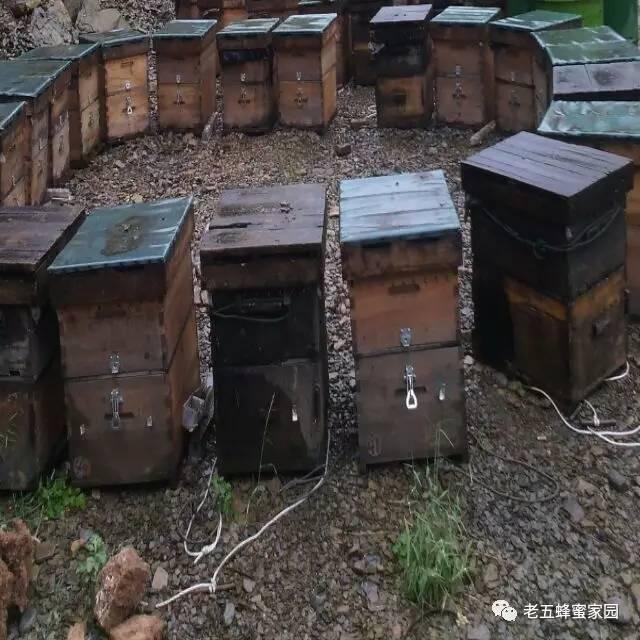 蜂蜜减肥 意蜂蜂蜜 百花蜂蜜 冻干粉 蜂蜜柠檬茶