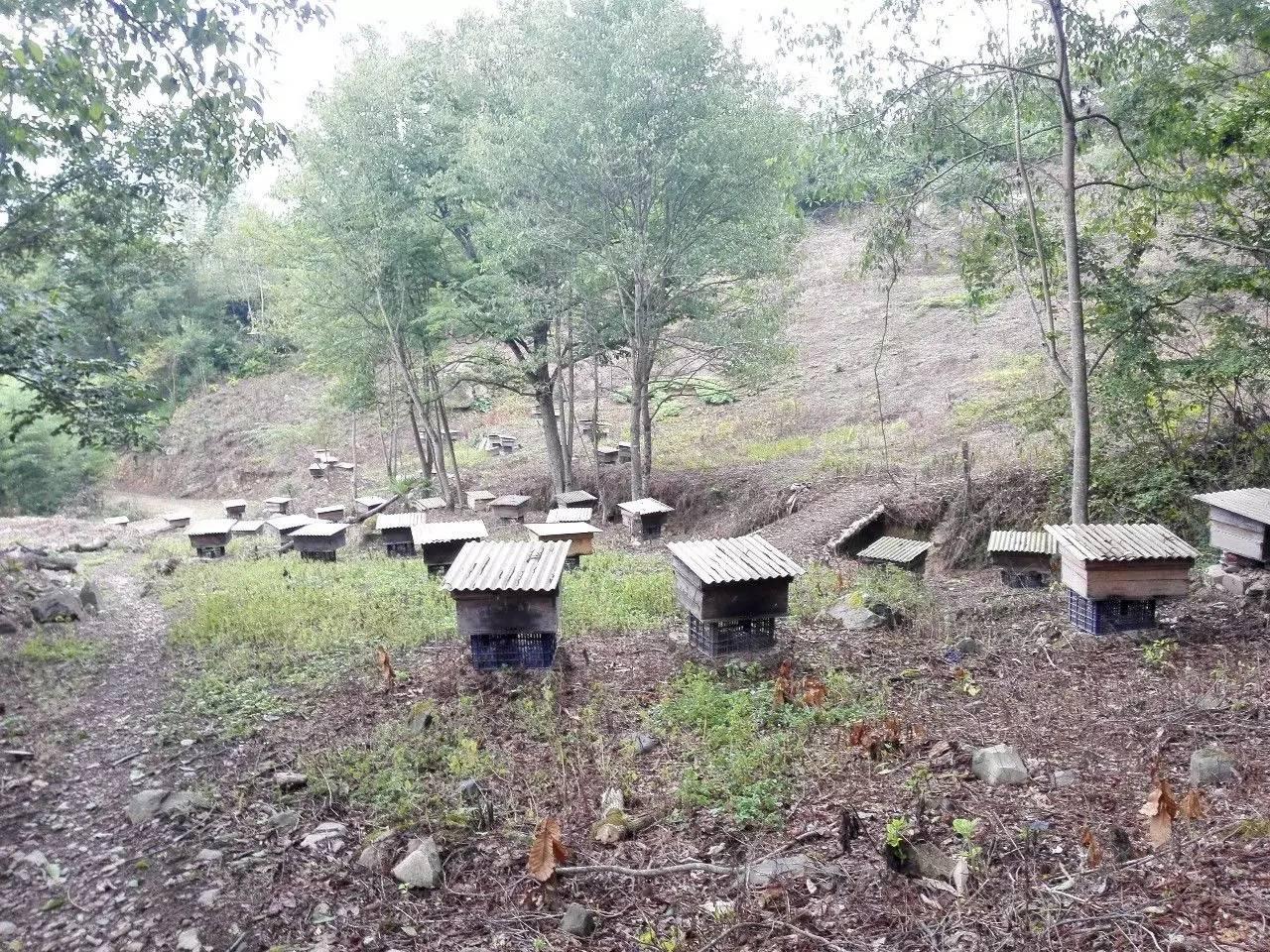 美容养颜 环境 蜂蜜芦荟 红茶加蜂蜜 无刺蜂