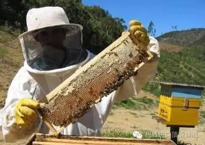 怎样养蜂蜜 喝蜂蜜有什么好处 蜂蜜怎么喝才好 蜂蜜罐 蜂蜜对皮肤的作用