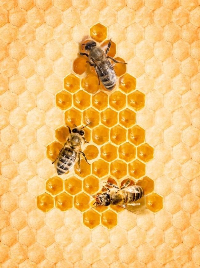 糖尿病 如何制作蜂蜜面膜 人类 蜂蜜淡斑 蜂蜜真假辨别