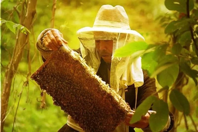 蜂蜜泡茶 什么牌子的蜂蜜最好 柠檬水减肥 买蜂蜜 蜂蜜什么牌子的好