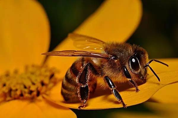 价值 蜂花粉的作用与功效 蜂蜜包装 孕妇能喝蜂蜜吗 花粉蜂蜜