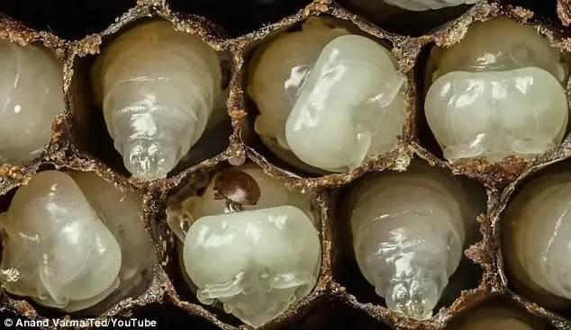 蜂蜜什么时候喝最好 蜂毒作用 蜂蜜功效 蜂蜜价格 哪里的蜂蜜好