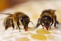 蜂蜜的保质期有多久?永不变质!!
