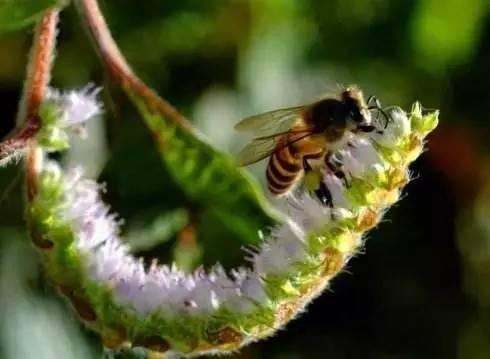 进口蜂蜜品牌 鸡蛋蜂蜜 蜂蜜价格 抗肿瘤 蜂蜜包装