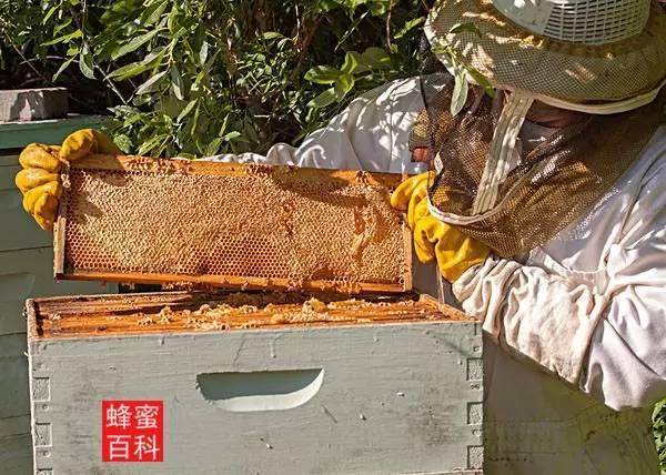 抗氧化性 三七粉加蜂蜜 天喔蜂蜜柚子茶 花外蜜 蜂皇浆