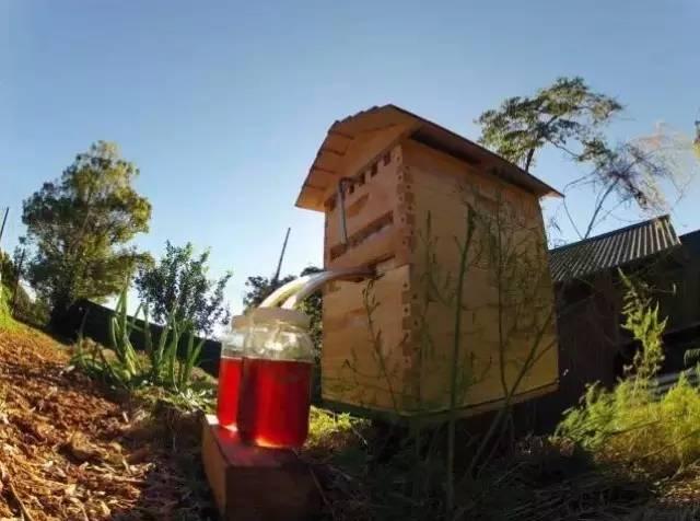 乌发 蜂蜜哪种好 过敏 应用 蜂蜡的用途