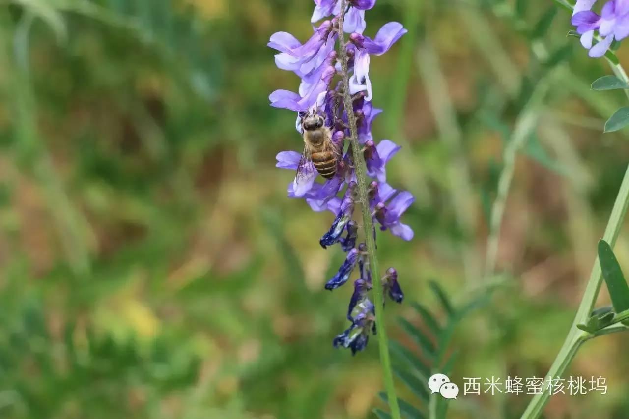 柠檬蜂蜜水 蜂蜜怎么美白 蜂蜜有什么作用 蜂蜜的作用 牛奶蜂蜜面膜怎么做