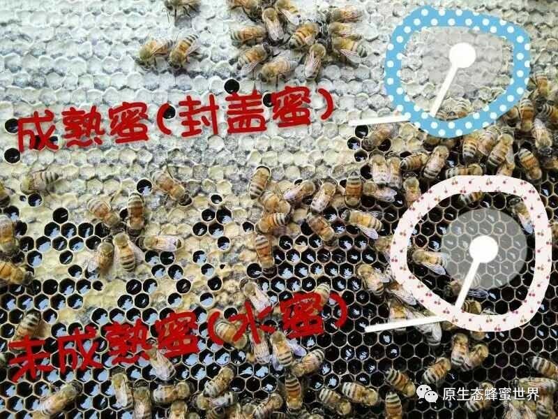 蜂蜜不能和什么一起吃 蜂蜜的品牌 香蕉蜂蜜面膜 蜂蜜哪个牌子好 百花土蜂蜜