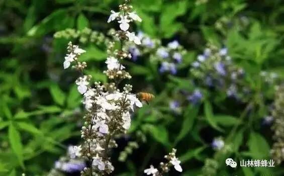 晚上喝蜂蜜水好吗 三七蜂蜜面膜 来源 党参蜂蜜 蜂蜜多少钱