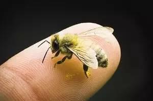 【蜂奥·头条】蜜蜂:人类原始艺术的精灵!