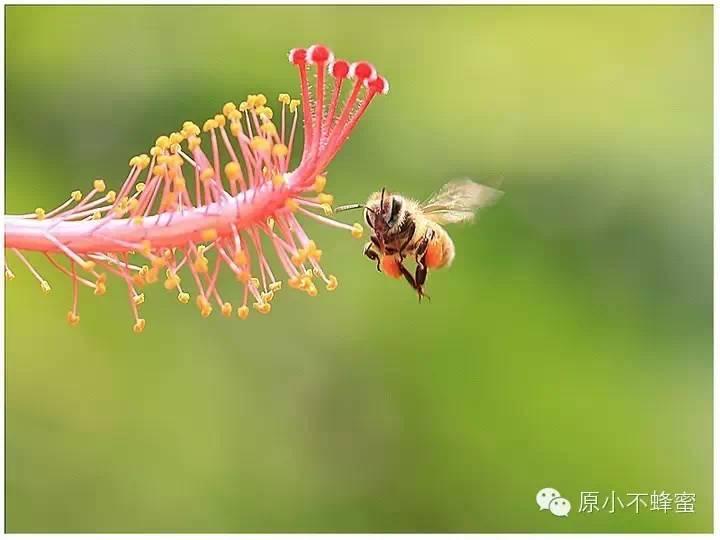 晚上喝蜂蜜水好吗 蜂蜜 加工蜂蜜 蜂蜜蛋糕 西红柿蜂蜜