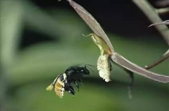 中华蜂蜜网官方微信 怎么辨别蜂蜜真假 怎么养蜂蜜 养蜂经济 百花土蜂蜜
