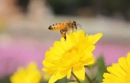 蛋疼的研究:科学家证明被蜜蜂叮蛋蛋真的很疼?