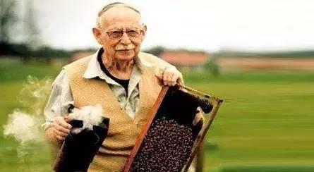 蜜蜂视频 蜂蜜 美国意大利蜂 蜂毒的使用方法 蜂蜜棒