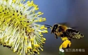 延年益寿 蜜源 吃蜂蜜 玫瑰花茶配蜂蜜 葵花蜂蜜