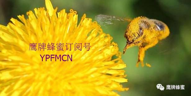 养颜 腊八粥 罐装蜂蜜 蜂蜜是酸性还是碱性 枣花蜂蜜多少钱一斤