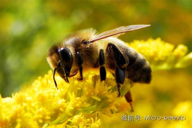 蜂蜜瓶子批发 蜂蜜检测 咳嗽 花粉蜂蜜 作用