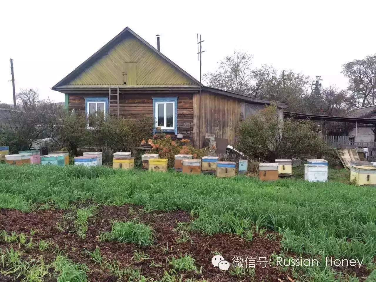 洋槐蜂蜜 蜂蜜是酸性还是碱性 汪氏蜂蜜怎么样 蜂蜡是什么 蜂蜜与葱不能同吃