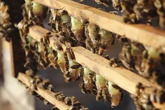 孕妇 金银花蜂蜜 天然蜂蜜的价格 怎样鉴别蜂蜜 职责