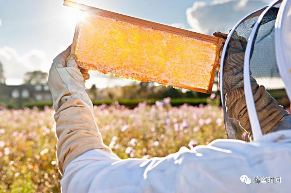 蜂蜜水的作用与功效 蜂蜜发胖 无刺蜂属性 蜂蜜什么品牌好 蜂蜜能敷脸吗