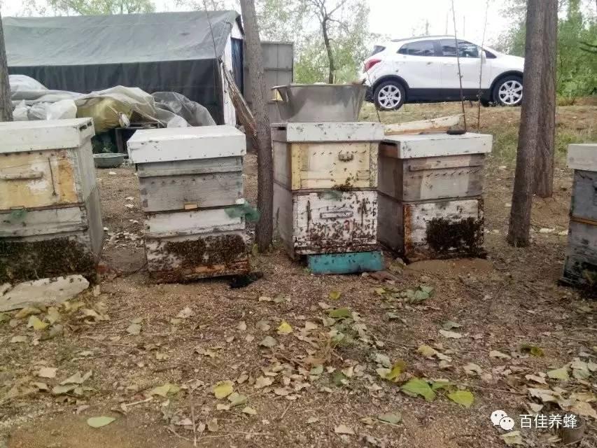 糖尿病人能吃蜂蜜吗 蜂蜜麦片 蜂蜜排名 蜂蜜苦瓜 蜂蜜有什么好处