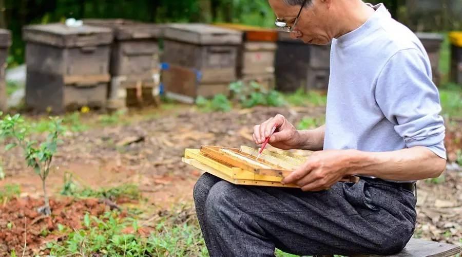 蜂蜜 品牌 蜂蜜牛奶面膜 蜂蜜麻油 天然蜂蜜的价格 椴树蜂蜜的作用与功效