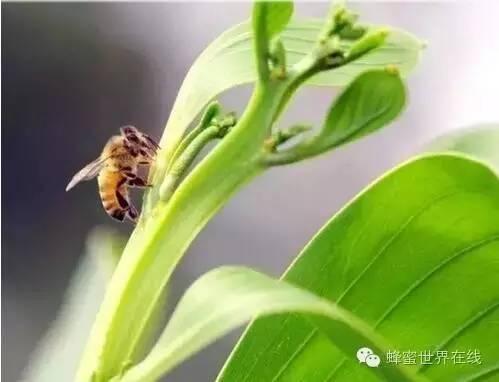 王国 喝蜂蜜的好处 蜂蜜洗脸的好处 牛奶蜂蜜面膜 蜂蜜禁忌