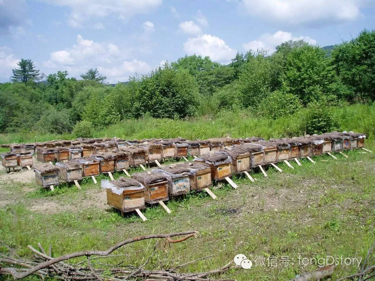 知识 蜂蜜知识讲堂 治疗 喝蜂蜜柠檬水的9个好处 蜜蜂