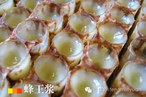 蜂蜜护肤 什么牌子的蜂蜜最好 蜂皇浆的作用与功效 蜂蜜罐子 形态