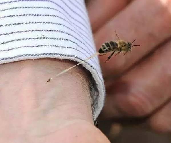 如何挑选蜂蜜 柠檬水减肥 玫瑰花蜂蜜茶 蜂蜜柠檬 消炎