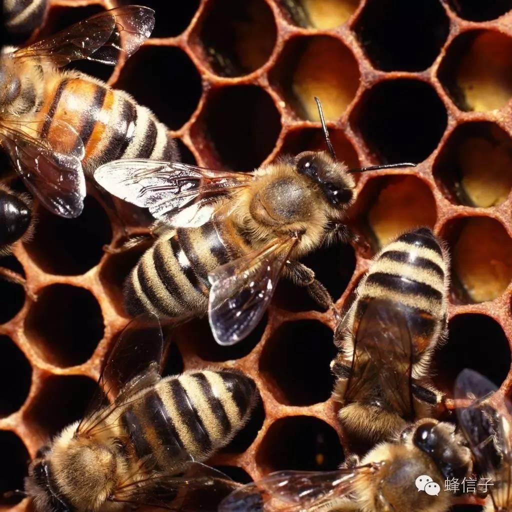 柠檬和蜂蜜 甘肃省 柠檬蜂蜜 什么蜂蜜排毒养颜 番茄汁