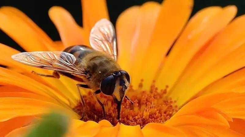 蜂蜜白醋水有什么作用 枣花蜂蜜的价格 外科 老蜂蜜 百花土蜂蜜
