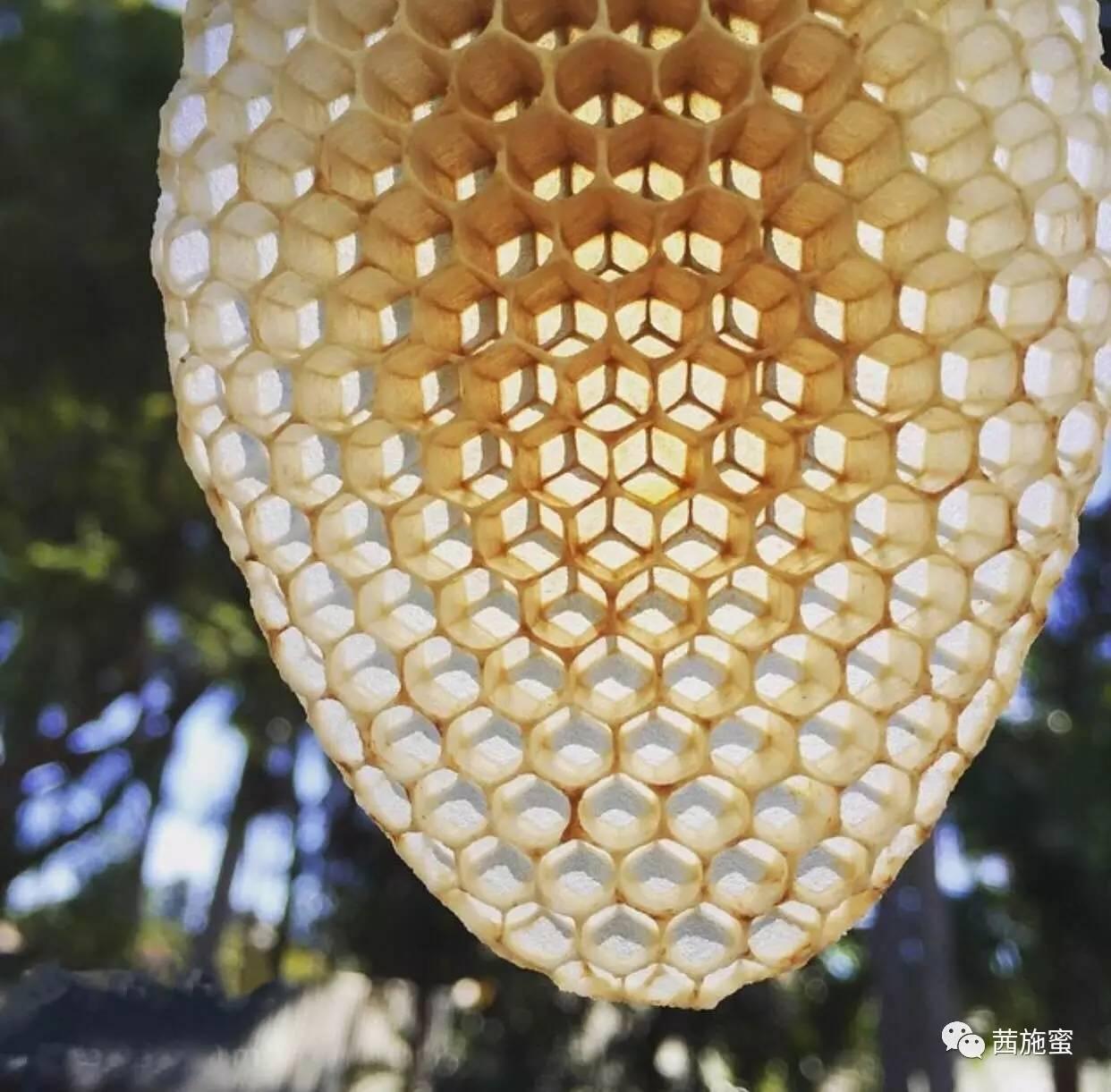 蜂蜜的功效与作用 视频 蜂蜜的保质期 幼虫 检验