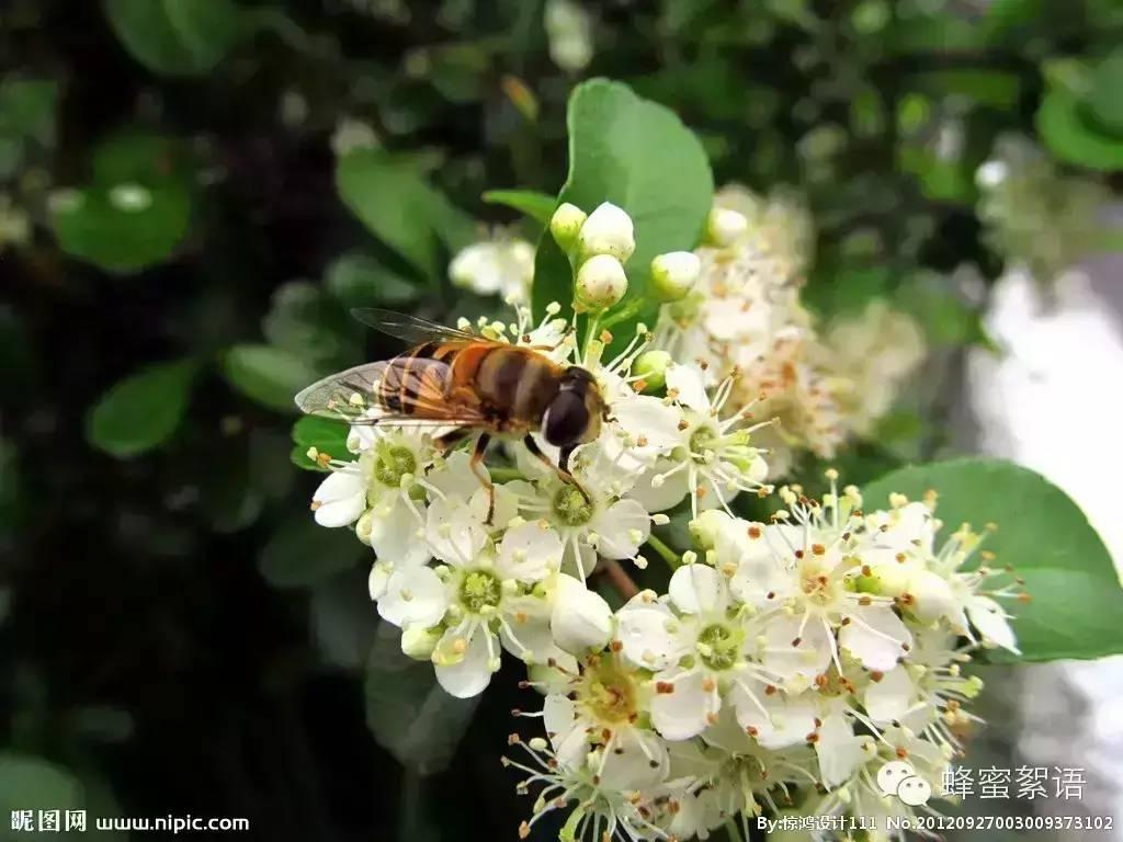 洋槐蜂蜜 禾木蜂蜜 蜂蜜怎样祛斑 香蕉蜂蜜面膜 蜂蜜品牌