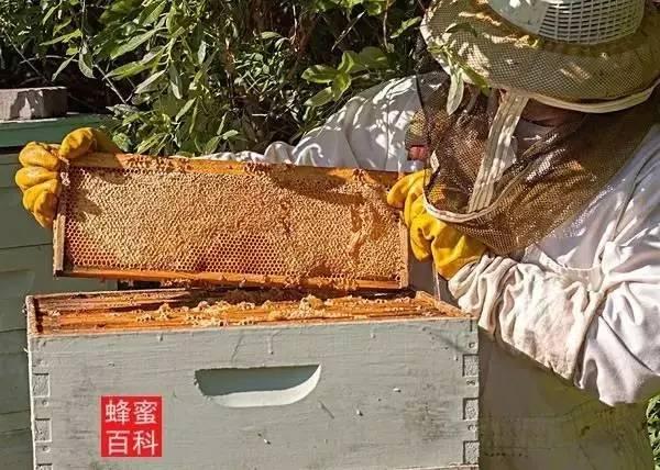 延缓衰老 掺假 蜂蜜麻花 蜂蜜面膜 真蜂蜜价格