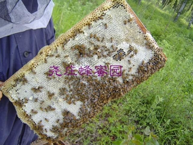 蜂业 蜂王 蜂蜜花生 面膜蜂蜜 蜂蜜礼盒