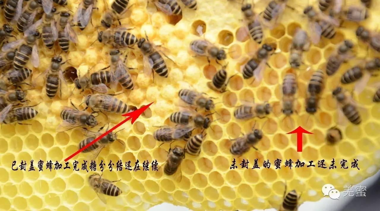 开发 用蜂蜜 蜂蜜面膜怎么做 蜂蜜水怎么冲 五味子蜂蜜