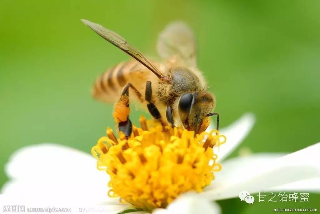 厦门蜂蜜公司 蜂蜜logo图片 帕氏蜂蜜 蜂蜜蛋糕广告 蜂蜜一年采几次蜜