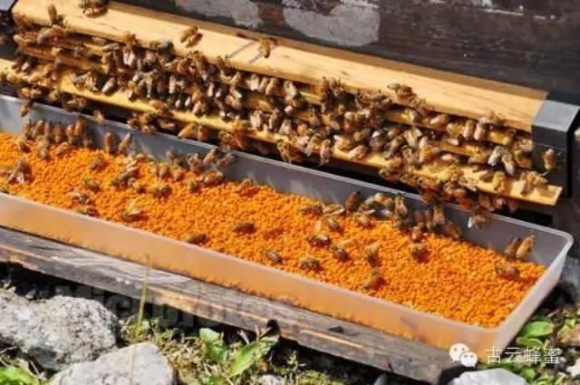 蜂蜜水空腹喝好吗 miel蜂蜜 小孩便秘喝蜂蜜水 蜂蜜抗生素 那种蜂蜜美容效果最好