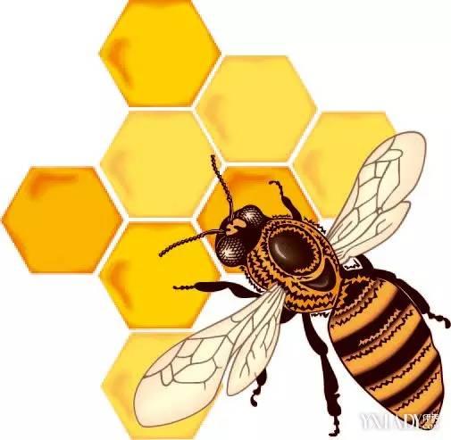 蜂蜜香精成分 蜂蜜堵毛孔 农家乐蜂蜜 蜂蜜怎么炒 叶氏蜂蜜