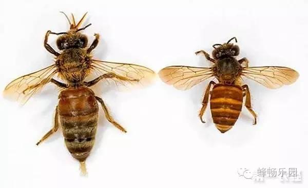 花粉兑蜂蜜 蜂蜜面膜怎样敷 绿豆蜂蜜面膜 蜂蜜好坏 蜂蜜招商